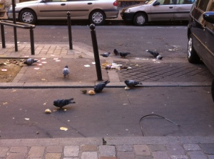 pigeon in paris